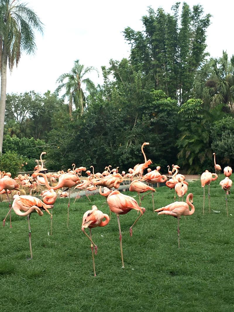 bunch-gardens-flamingos